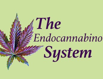 The Endocannabinoid System and Human Health